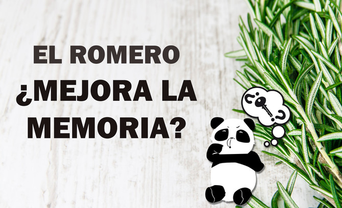 El Romero mejora la memoria en un 75% ¿Es cierto?