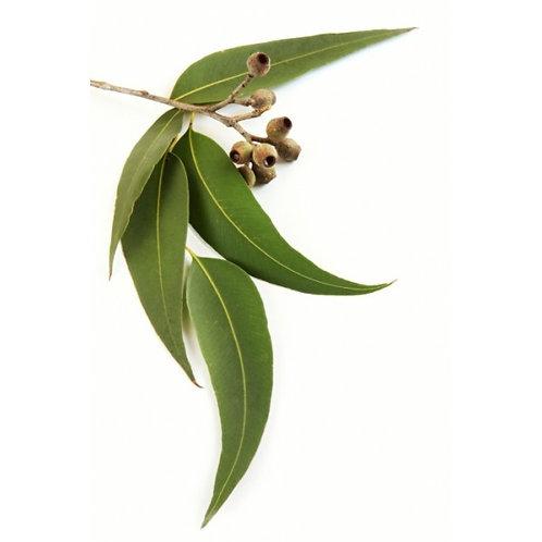 Eucalipto 30 ml Esencia aromática