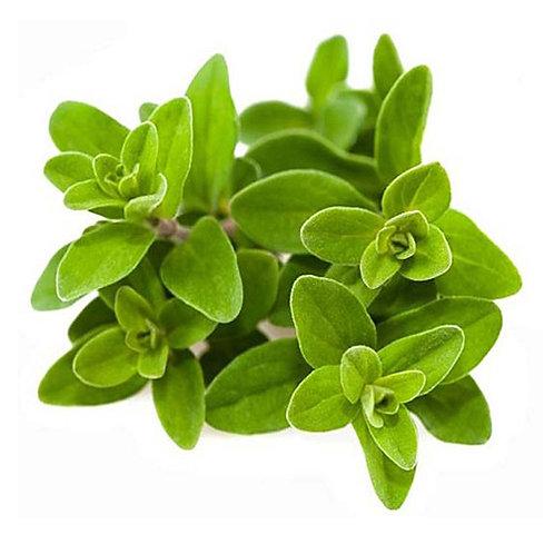de Aceite Esencial Mejorana Orgánica 15 ml Grado Terapéutico