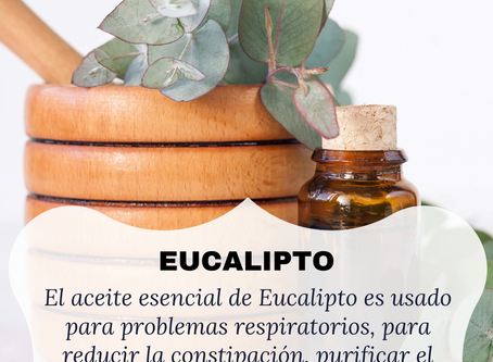 ¿Para que sirve el eucalipto?