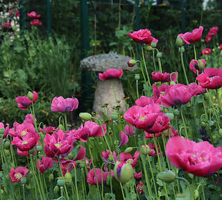 Naturalist Garden Design Camberley