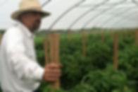 organic hothouse fertilizer