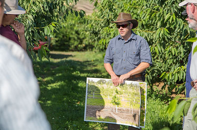 Solutions to Bacterial Canker Discussed at Orchard Tour