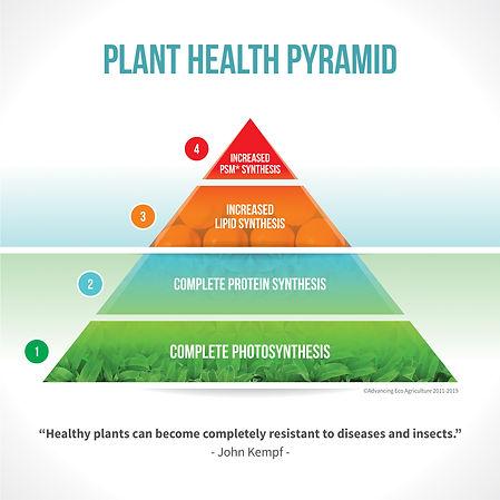 Pyramid Plant V3 Carousel.jpg