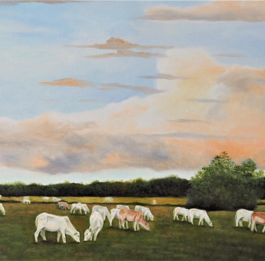 White Cows in Field.JPG