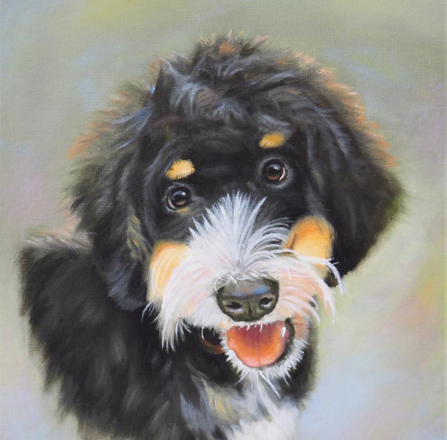 Chloe Bermese Doodle dog portrait.JPG