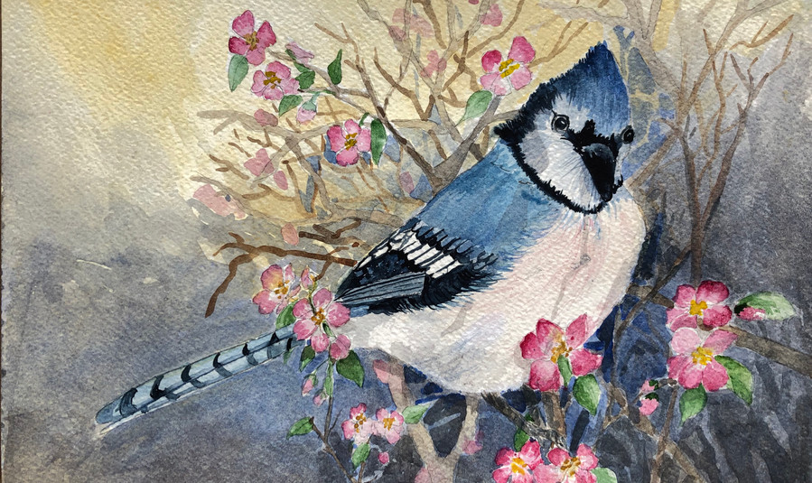 850 - Bluebird in apple tree .jpeg