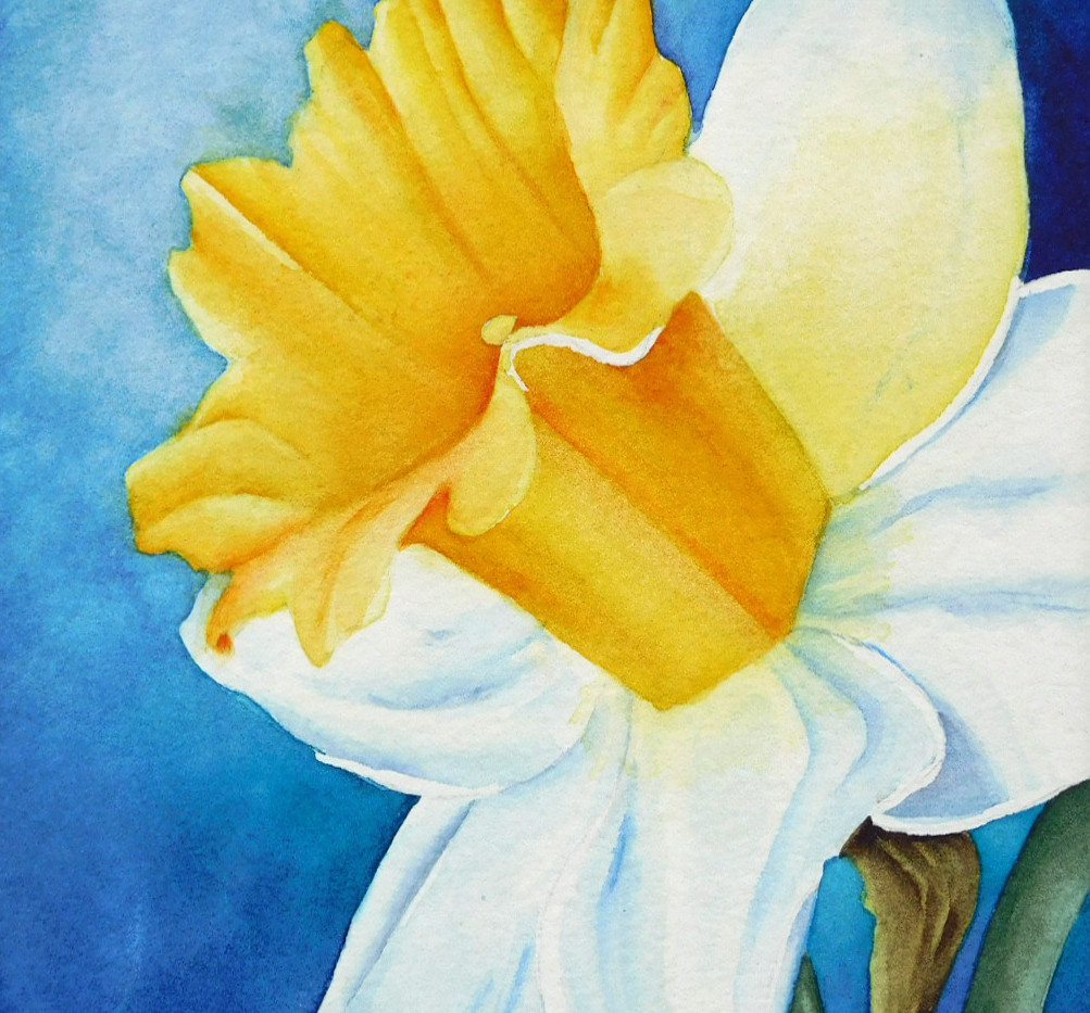 Artist Tour Daffodil.jpg