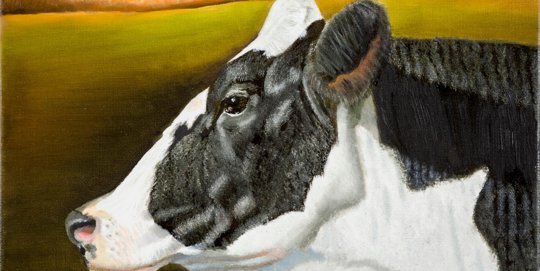 Cow at Sunset Van Zandbergen Photo.jpg
