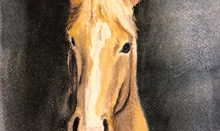 831 - Becky's horse.jpeg