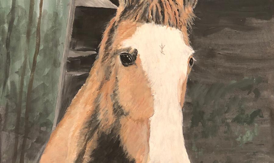 846 - Horse .jpg