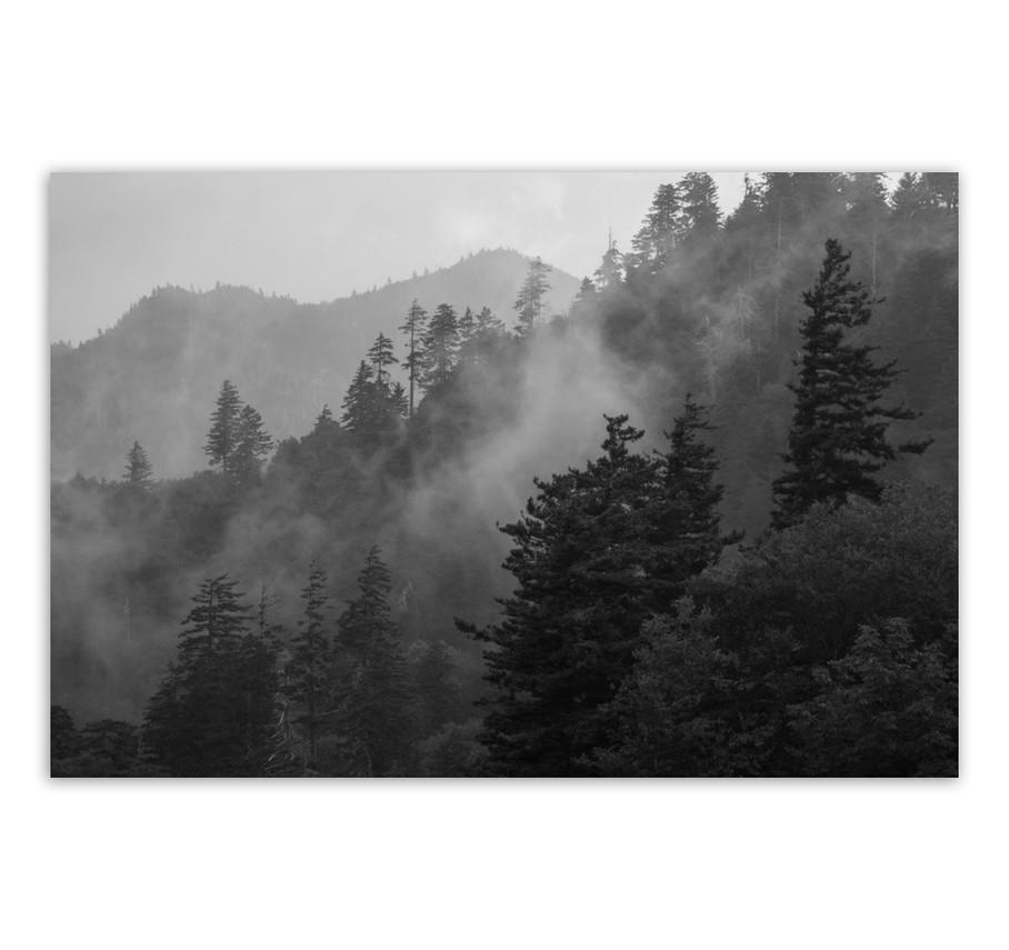 Newfound Gap Fog no 1.jpg