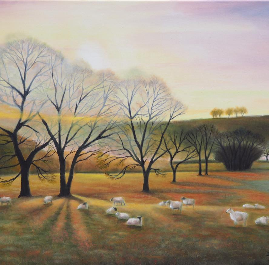 Sheep in the Sun's Rays.JPG