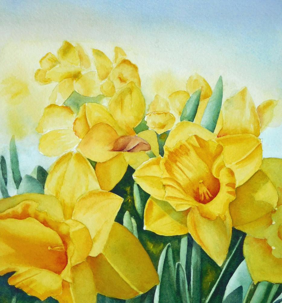 Artist Tour Daffodils.jpg