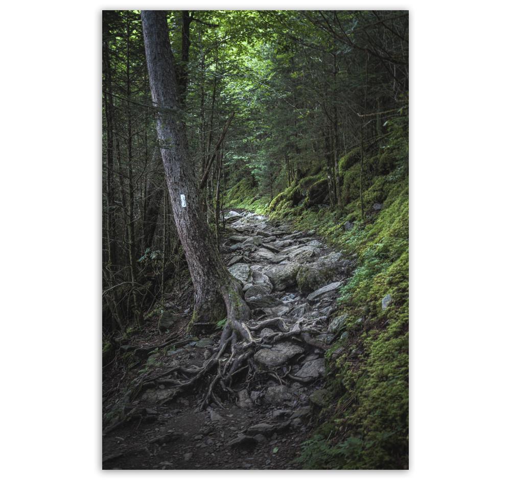 Appalachian Trail 2018.jpg