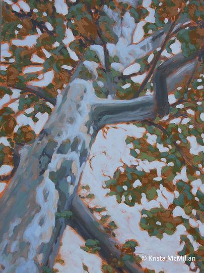 tree-art-niagara-london-plane-tree.jpg