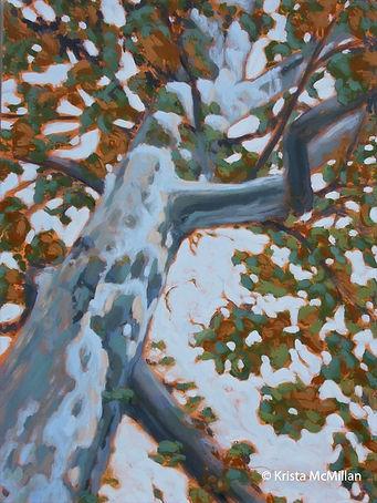 tree-art-niagara-london-plane-tree_edite