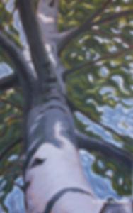 tree-painting-niagara-poplar.jpg