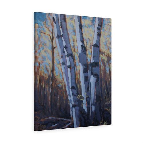 Hilton Falls Birches