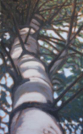 Tree-art-bruce-trail-Glen-haffy.jpg