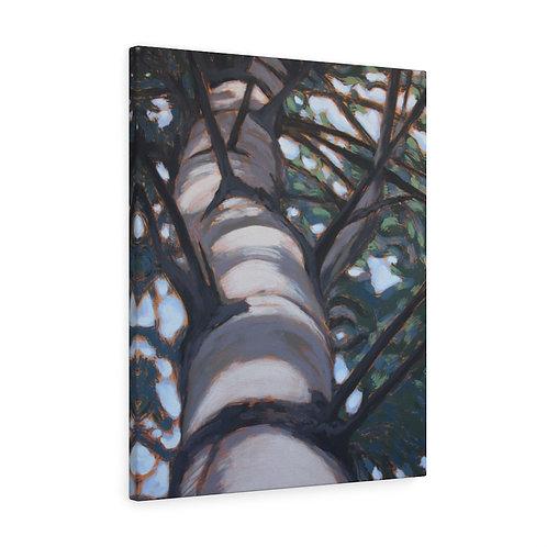 Sunlit White Pine