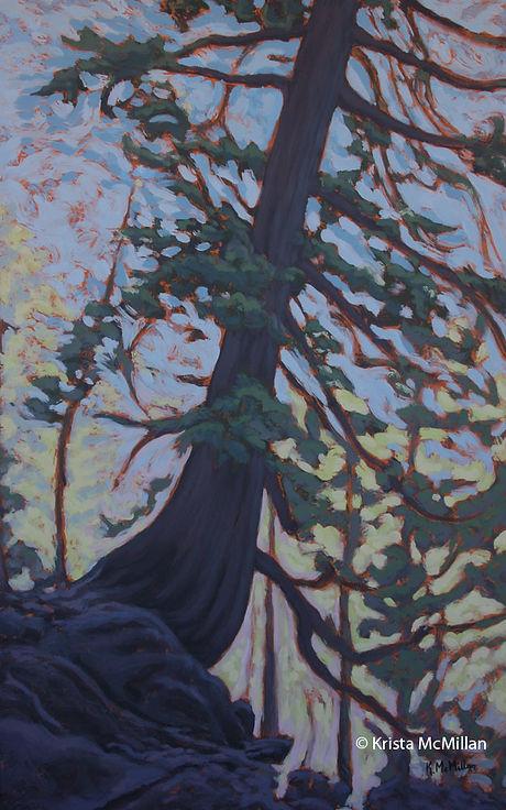 tree-art-grimsby-white-pine.jpg