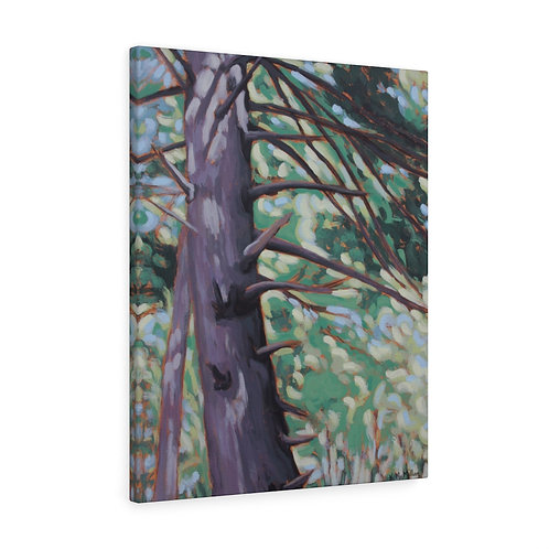 Pastel Pine