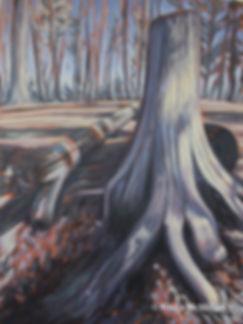 tree-art-bruce-trail-cedar.jpg