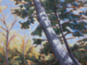 Sunlit Pine          40 x 30.jpg