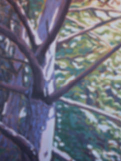 tree-art-Glen-haffy-scott-pine.jpg