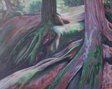 tree-art-Algonquin-park-cedar-roots.jpg