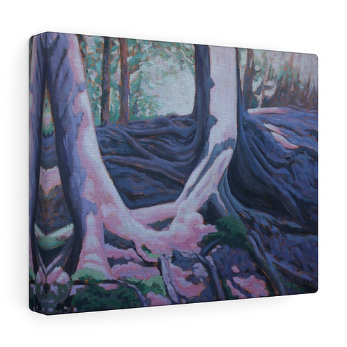 Limehouse Cedars