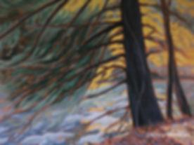tree-art-Balls-falls-Bruce-trail.jpg