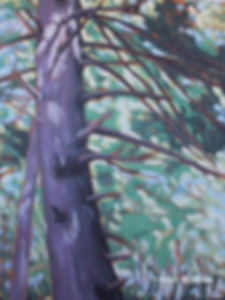 tree-art-Bruce-trail-white-pine.jpg