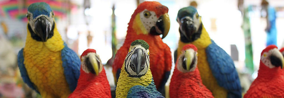 Parrots Content in Spanish