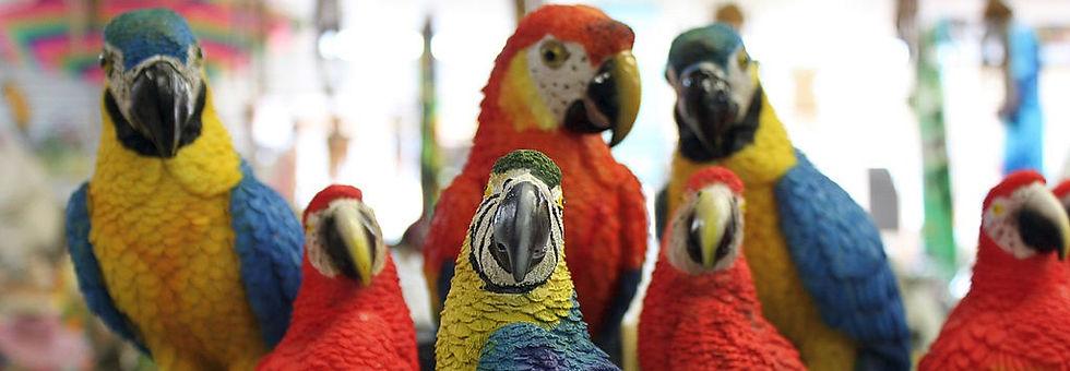 Parrots Content in Spanish