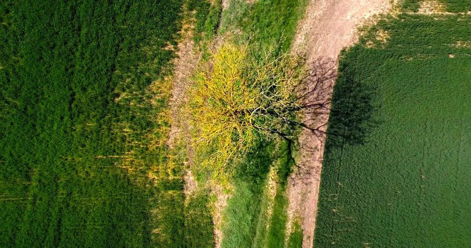 TreeTop.mov