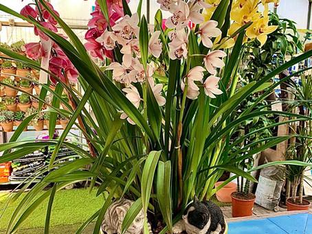 Centro de orquídeas diseñado por Jardín del Rocío