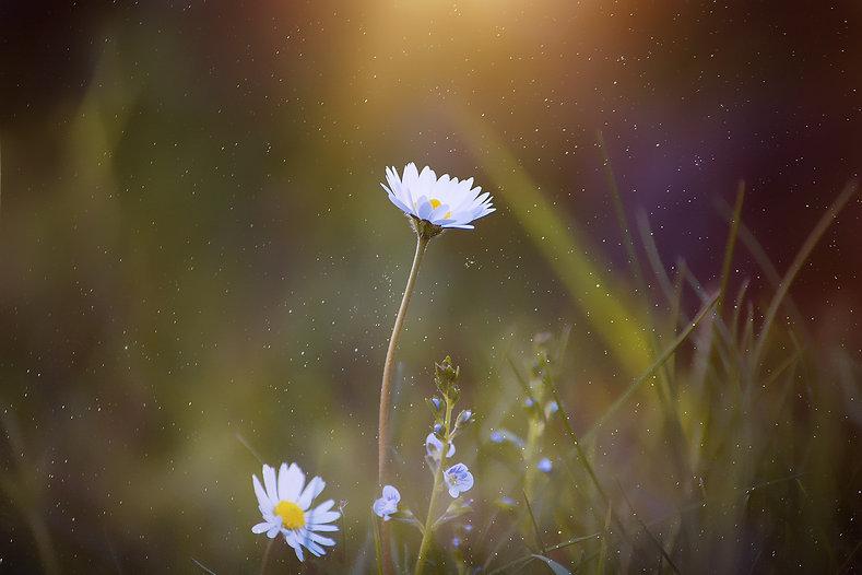 blooming-blur-close-up-459059.jpg