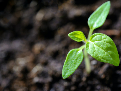 Rebuilding our Topsoil of Resilience