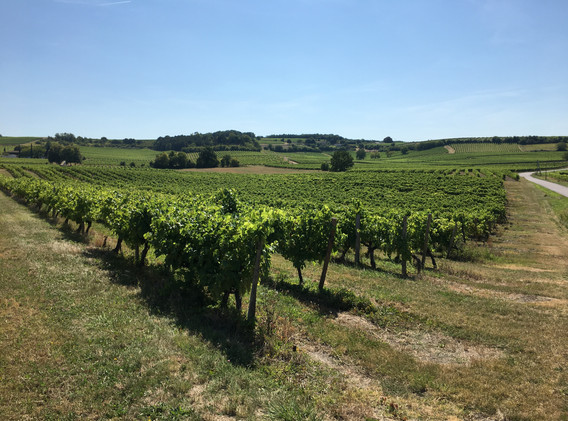 IMG_0680. Cognac country jpg.jpg