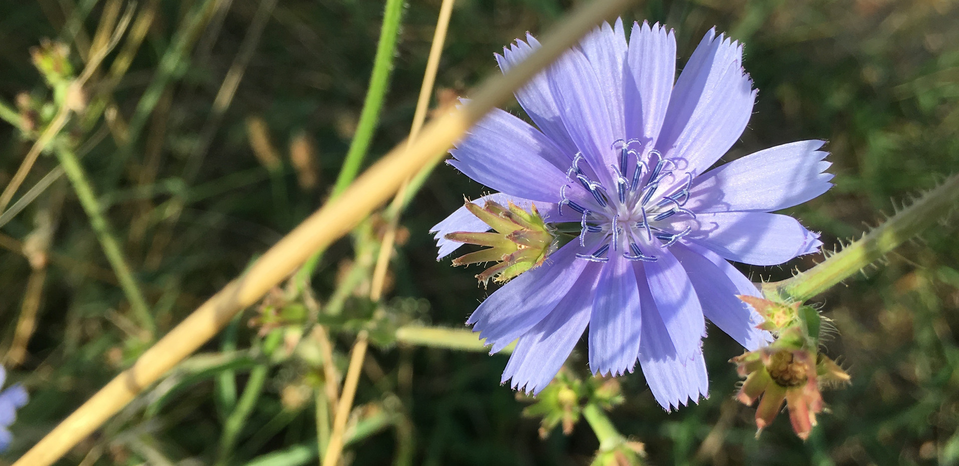 IMG_0444. Wild Flowersjpg.jpg