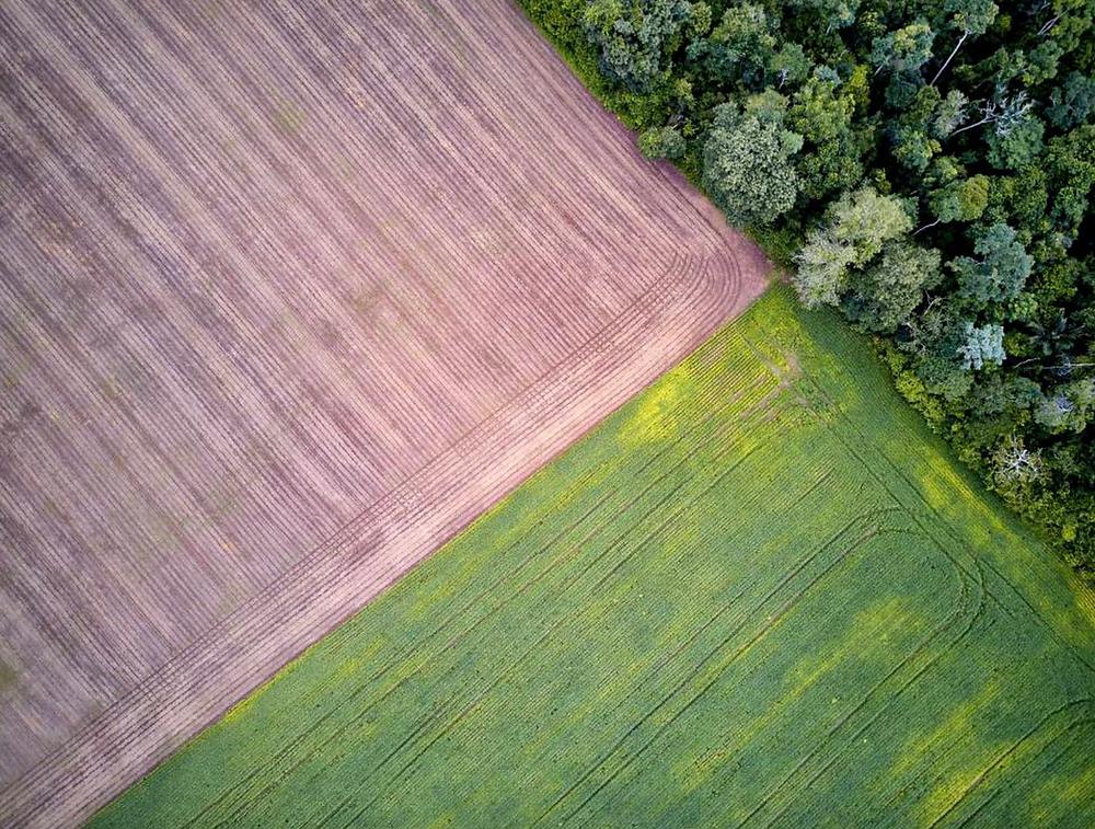 Plantações de soja no limite da área da Floresta Nacional no baixo Tapajós (PA). Crédito: Pablo Albarenga