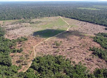 ARTIGO: Governo Bolsonaro patrocina a maior apropriação privada de terras públicas da história