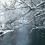 Snow Covered Branches Over the River, ph