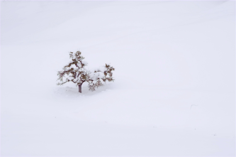 Serie las formas del invierno VI