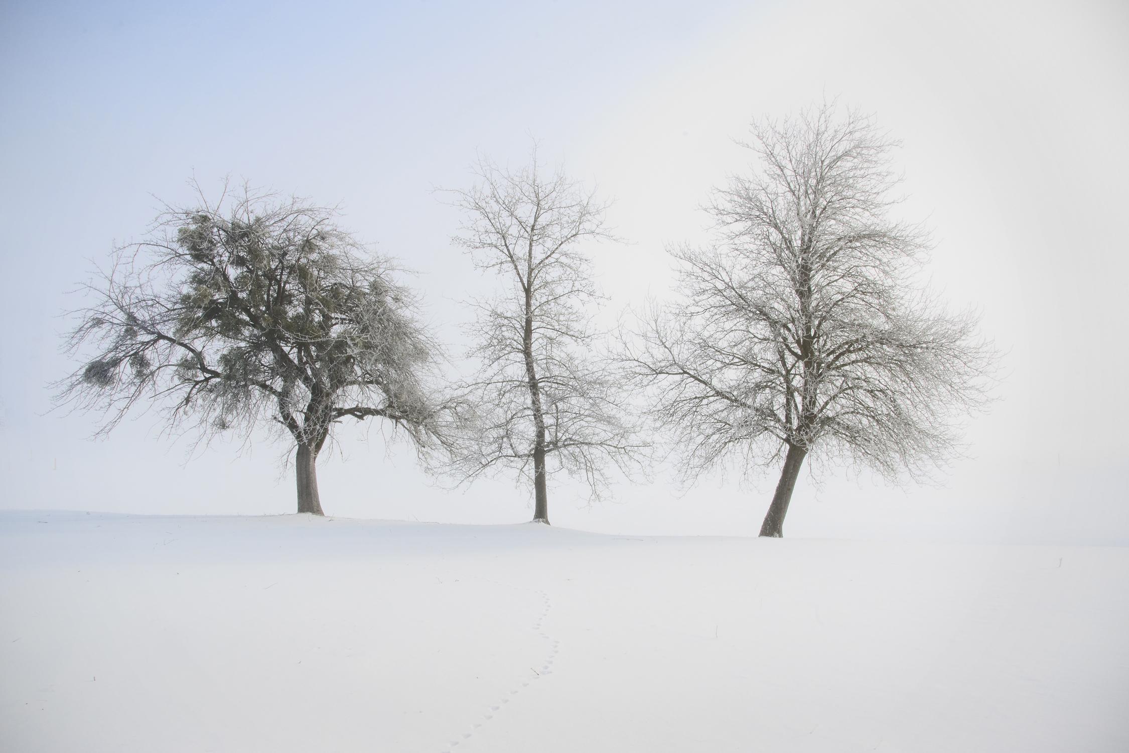 Serie las formas del invierno VIII