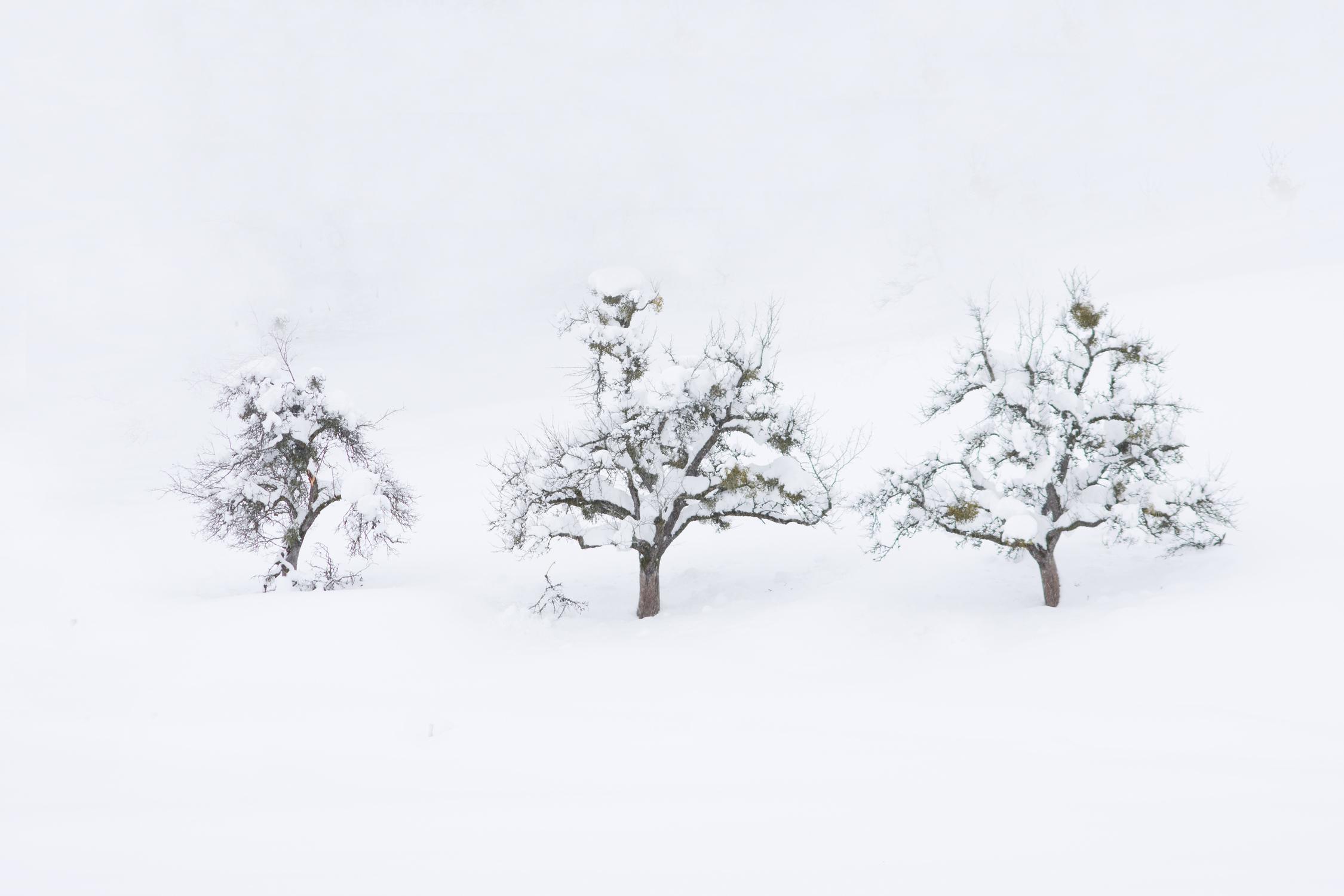 Serie las formas del invierno X
