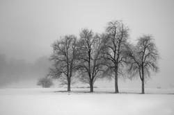 Serie las formas del invierno IV