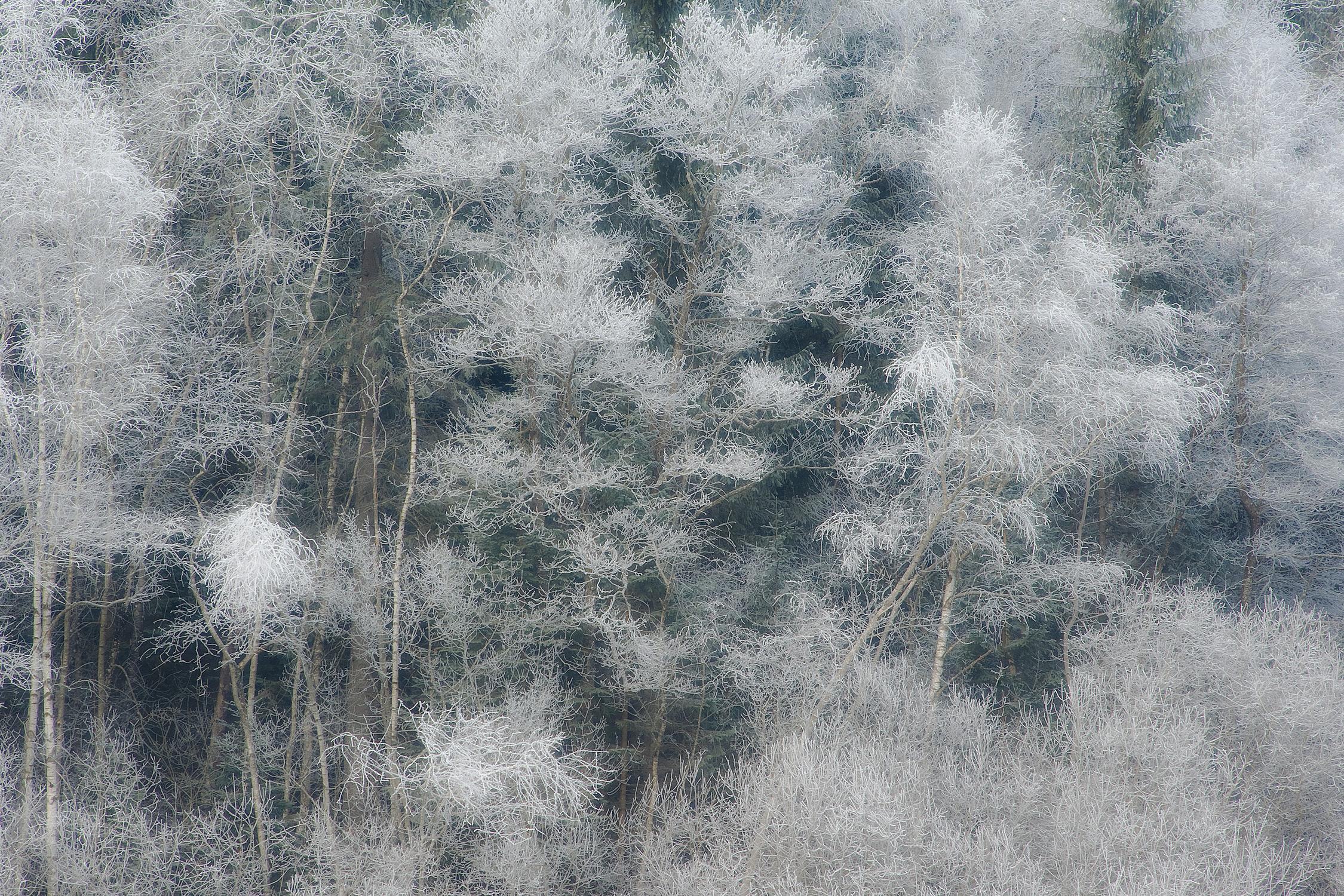 Serie las formas del invierno V